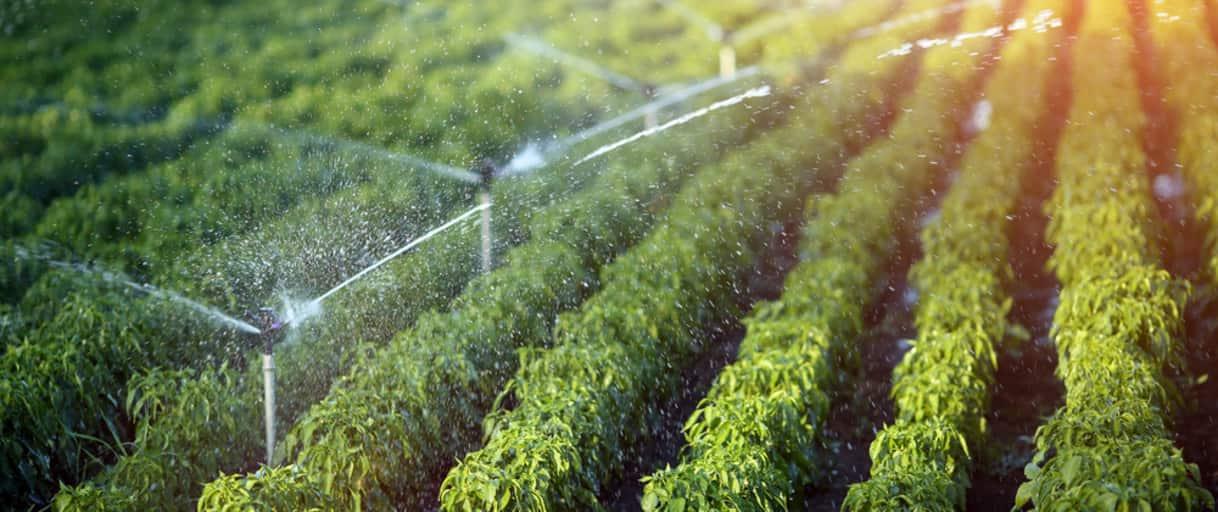 Reutilización de aguas residuales para riego BLUEGOLD