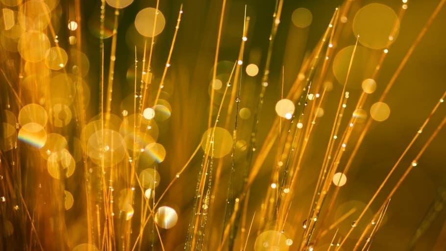 Nanopartículas de oro en el tratamiento de agua