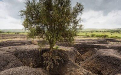 Erosión del suelo, una razón para desarrollar una economía circular efectiva
