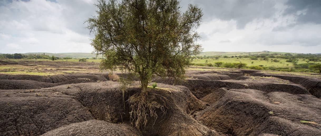 erosión del suelo Bluegold