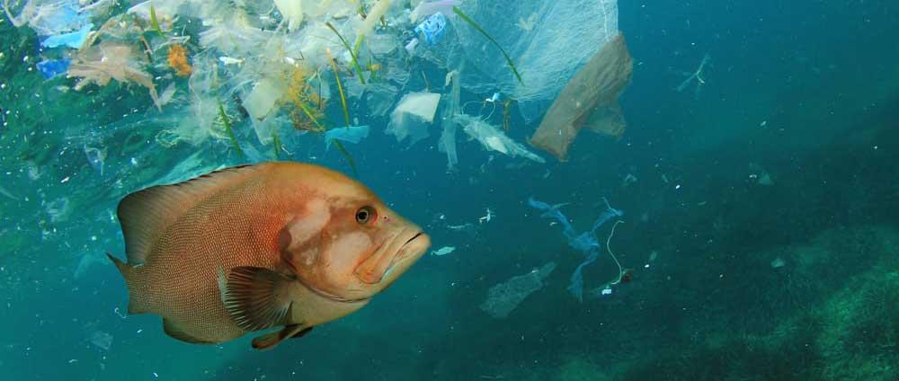 Movilización de instituciones internacionales para la reducción de plásticos