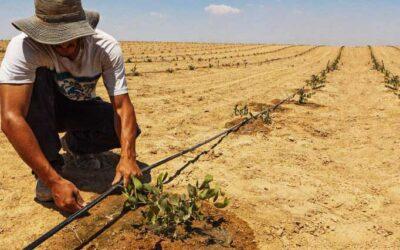 Monitorización del agua subterránea con aplicaciones agrícolas en zonas áridas