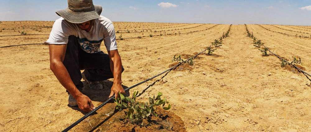 Monitorización del agua subterránea con aplicaciones agrícolas en zonas áridas-Bluegold