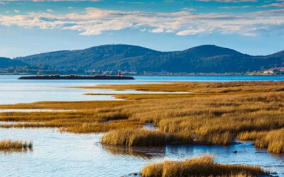 Un Día Mundial para recordarnos la importancia de los humedales como fuente de agua