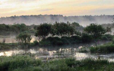 Una investigación sobre 48 ciudades resalta la importancia de la naturaleza para la desinfección en el saneamiento del agua.