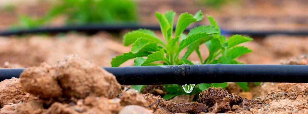 La-problemática-de-los-cloratos-y--percloratos-en-la-agricultura-y-la-industria-Bluegold